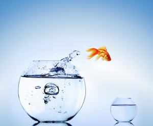 fish jumping out of fishbowl